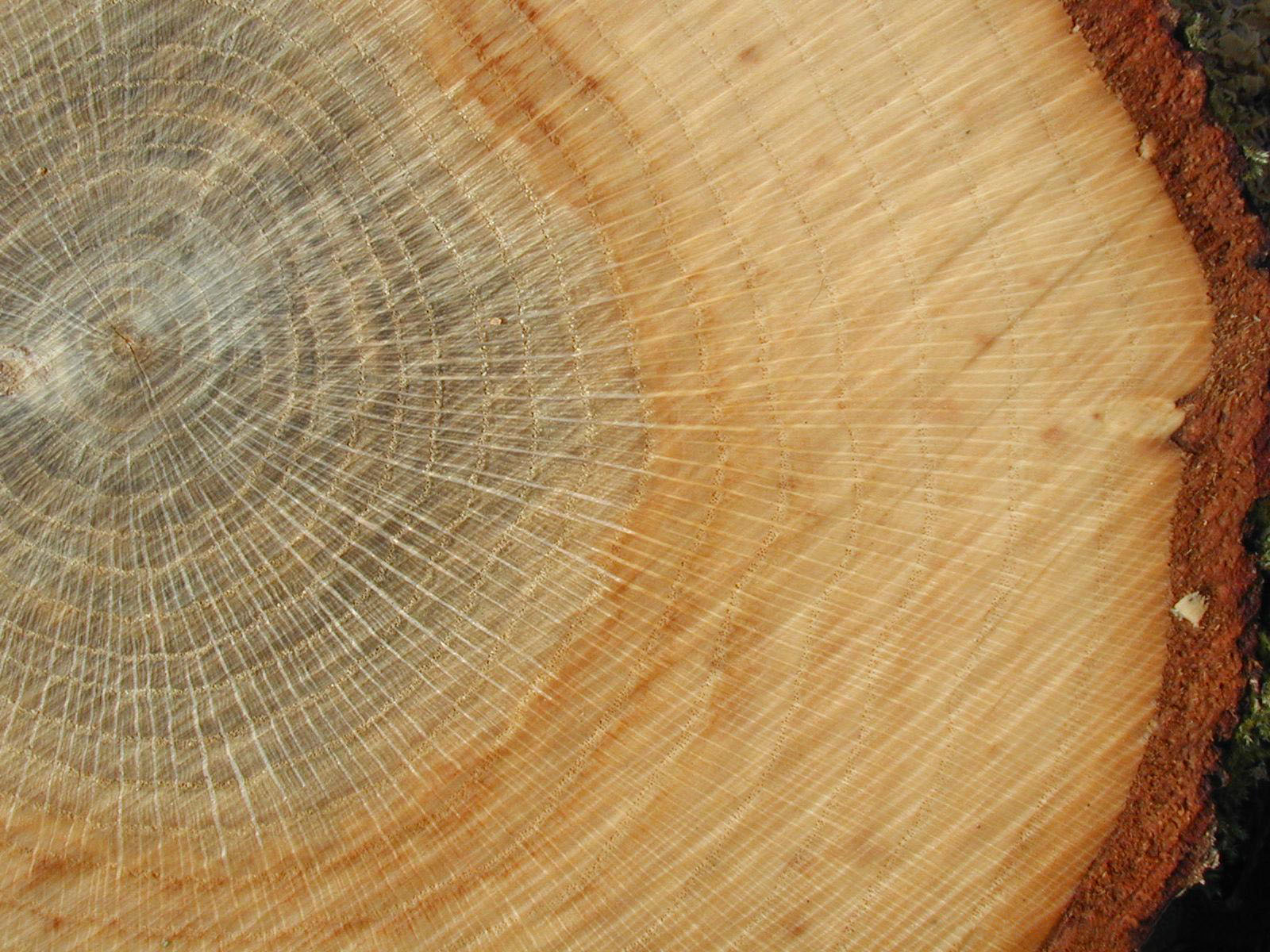 Differentiate wood from wood and wood